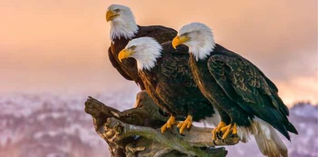 12171330_three-eagles.jpg