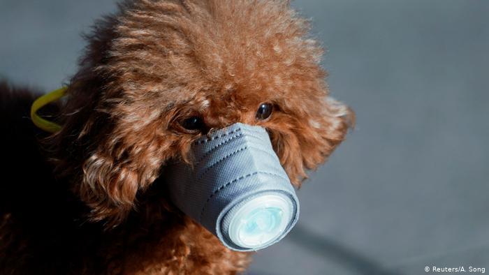 Hund mit Atemschutzmaske Coronavirus China Shanghai (Reuters/A. Song)