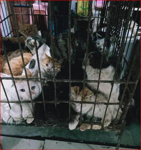 宰貓屠狗 兔子剝皮…中國野味市場又開張了